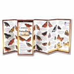 Field Guide: Insects of Eastern North America