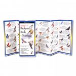 Field Guide: Sibley's Backyard Birds of the Northeast